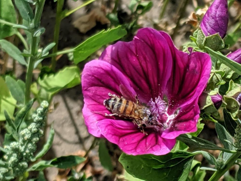 Biene ist nicht gleich Biene