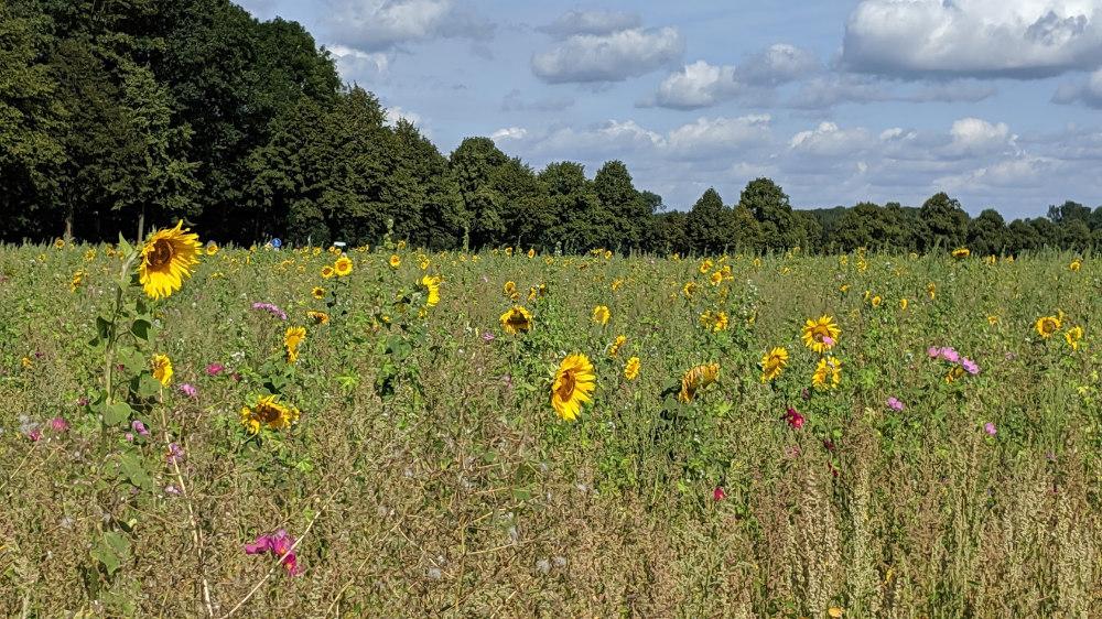 Ökologische Vorteile von Blühflächen
