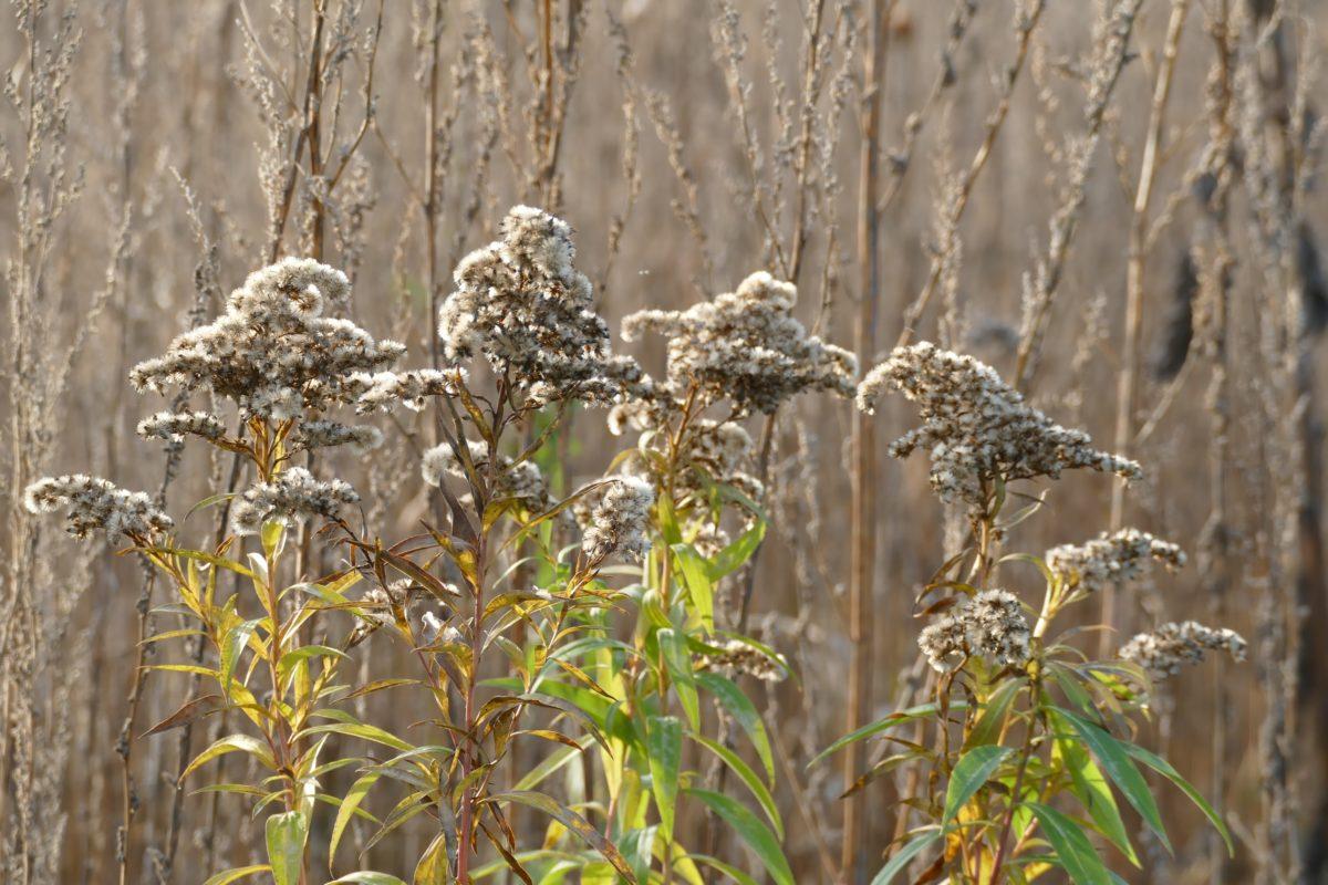 Blühflächen im Winter
